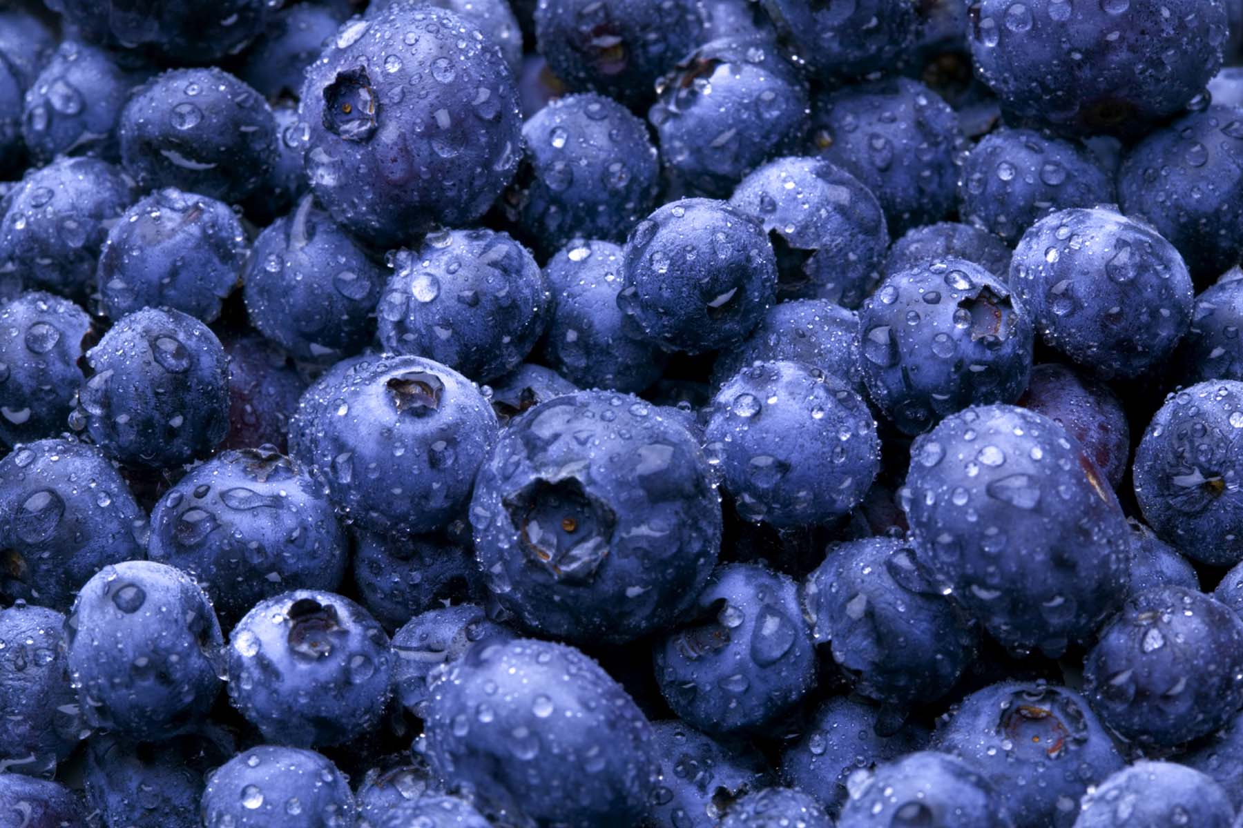 Generation Iron Blue Berries