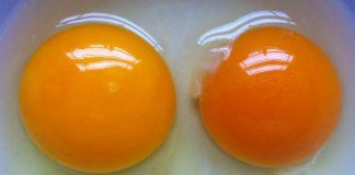 Whole Eggs Vs Egg Whites Generation Iron