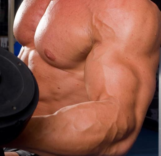 muscle accommodating resistance