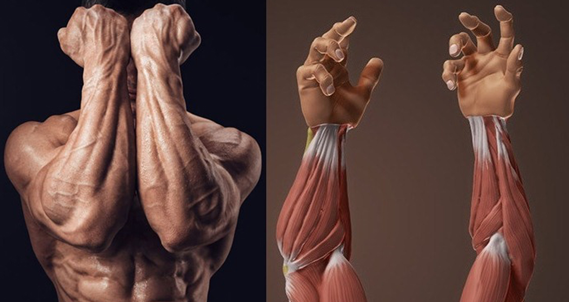 5 Exercises For Massive Forearms - Generation Iron