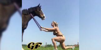 Training Partner Horse Generation Iron